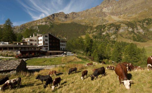 hotel con mucche